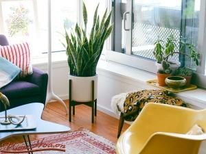 Cách giúp nhà của bạn mát mẻ hơn trong những ngày nắng nóng